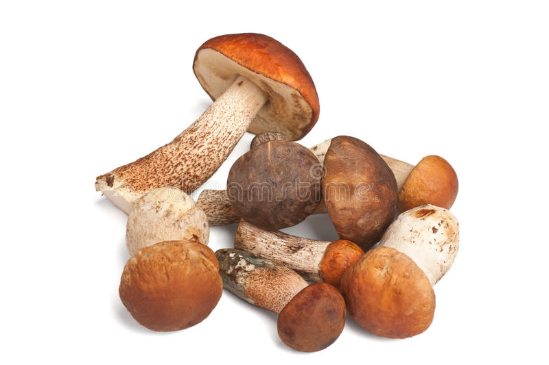 Wild Mushrooms. On white background royalty free stock images