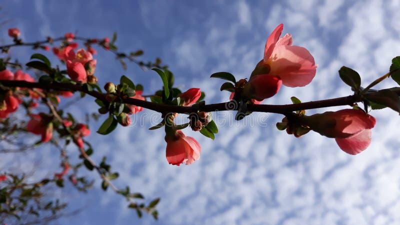 Download Wild nam bloemen toe stock foto. Afbeelding bestaande uit groen - 114225162