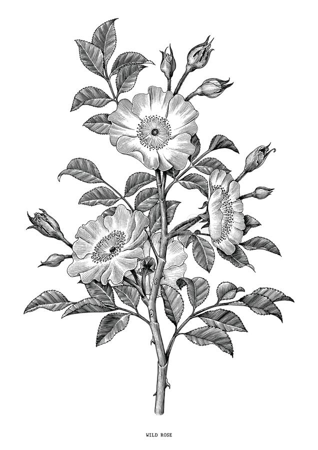 Wild nam hand trekkend zwart-witte uitstekende geïsoleerde klemkunst toe royalty-vrije illustratie