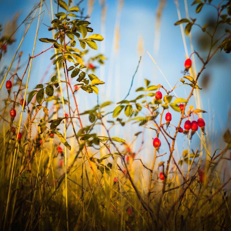 Wild nam met rijpe vruchten op blauwe hemelachtergrond toe royalty-vrije stock fotografie