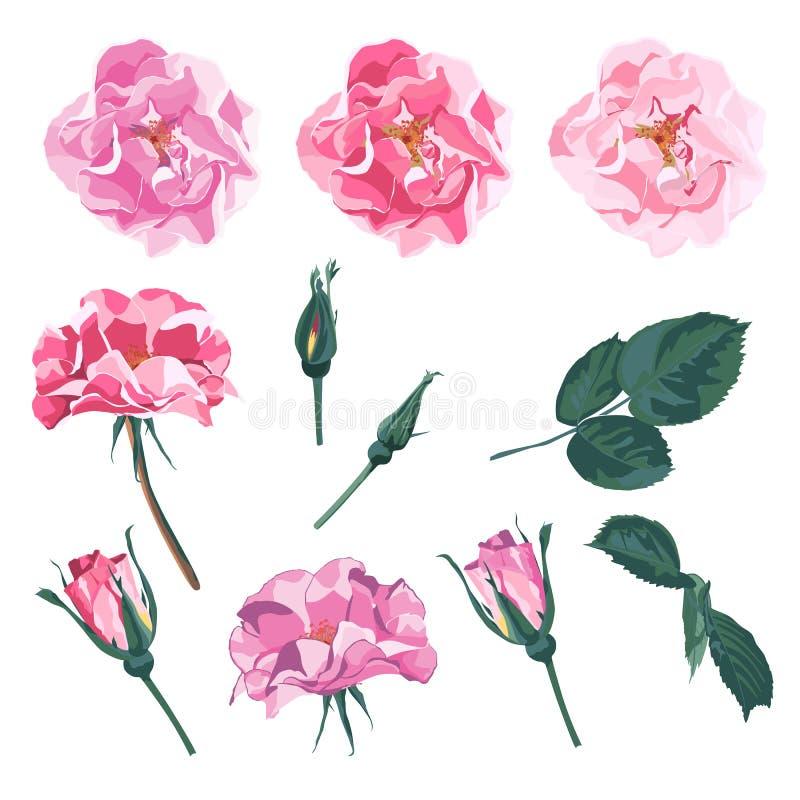 Wild nam rosa caninahond toenam tuinbloemen toe vector illustratie