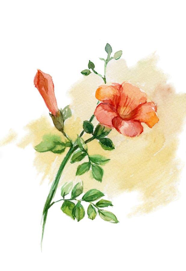 Wild nam toe (Rosa canina) vector illustratie
