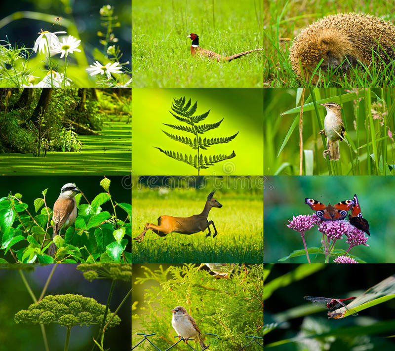 Wild nature stock photo