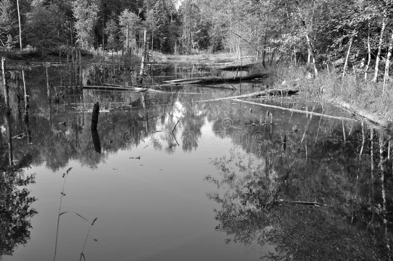Download Wild Nature. Stock Photo - Image: 25924040