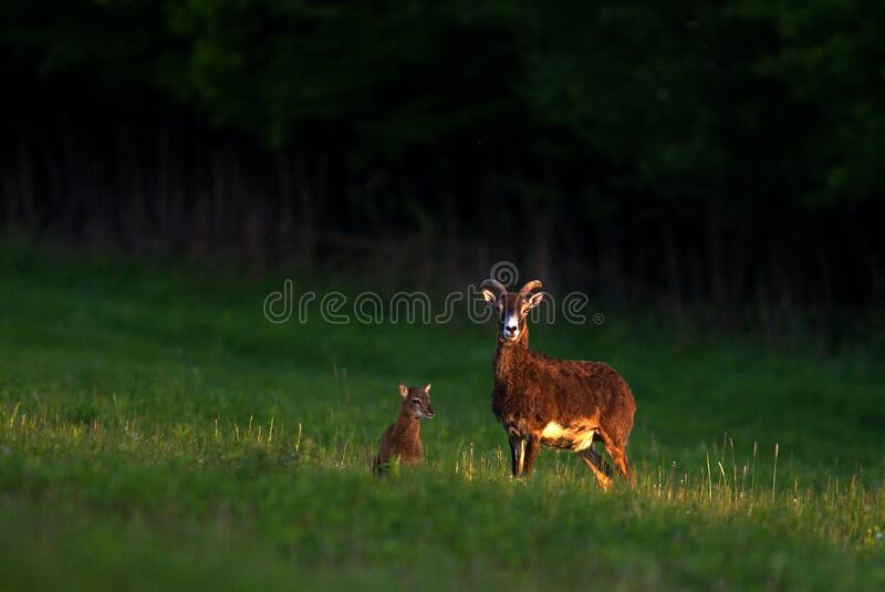 Wild nature and animals royalty free stock photos