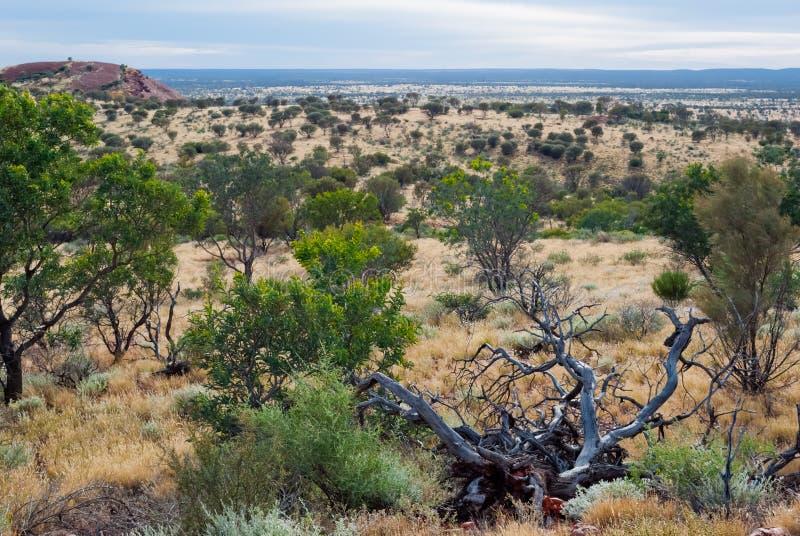 Wild nature in the Australian bush
