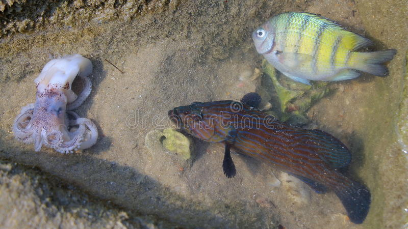 Wild nature. Beautiful fish. Cute octopus. stock photography