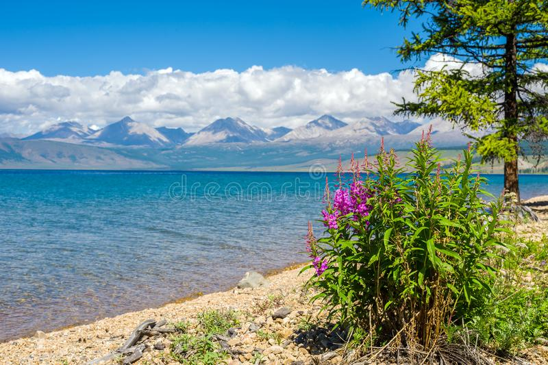 Wild nature of Mongolia. A beautiful view of Lake Hovsgol and the Eastern Sayan Ridge royalty free stock photos