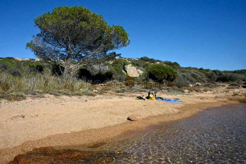 Wild nature on a sandy beach with tree, the sea royalty free stock photos