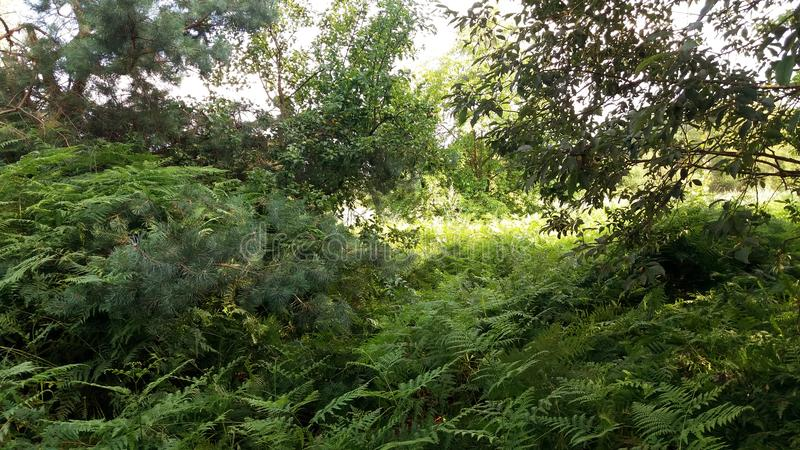 Wild nature, thickets, ferns and trees. Green flora. on the edge of the forest and meadows. bush meeting stock photos
