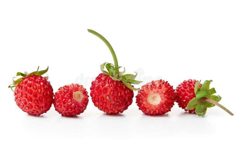 wild nya jordgubbar royaltyfri bild
