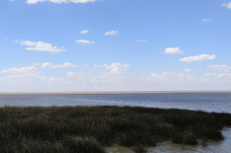 Coast of the ocean overgrown with grass, ecologically clean area. Wild ocean coast in the distance can see the horizon, coast of the ocean overgrown with grass stock photos