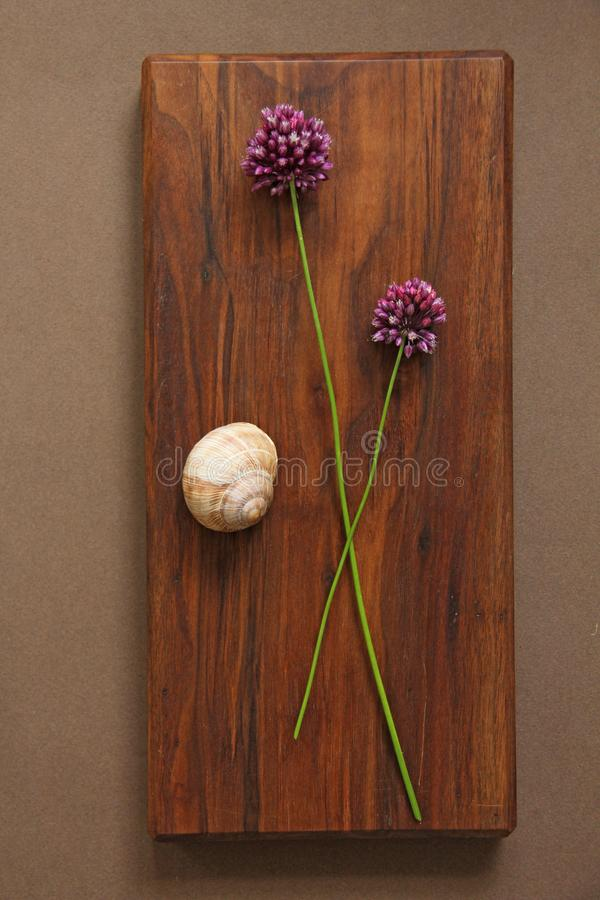 Wild onion violet on a wooden background of black walnut. Beautiful summer wildflowers and snail, grape snail. vertical, vertical stock photography