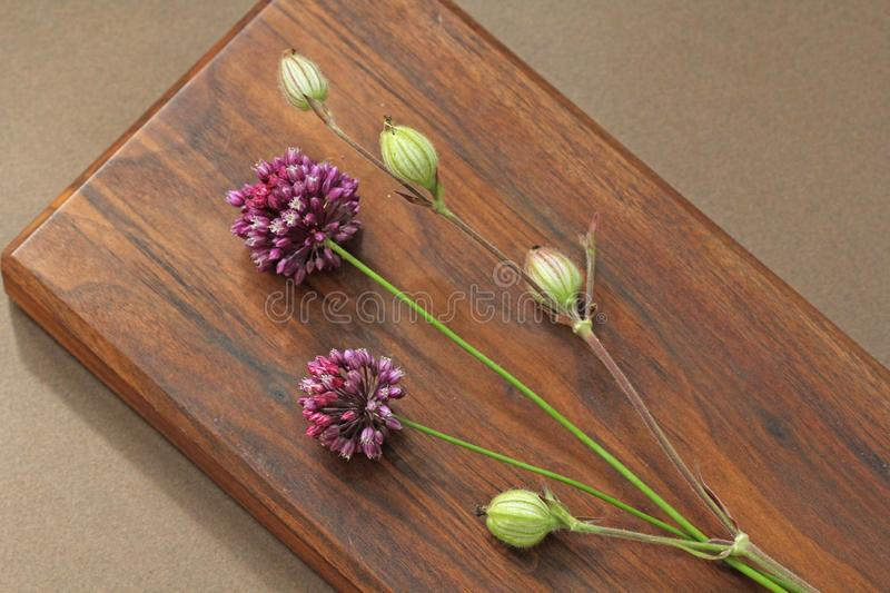 Wild onion violet on a wooden background of black walnut. Beautiful summer wildflowers. Minimalism, loft style royalty free stock photos