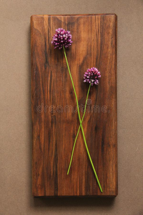 Wild onion violet on a wooden background of black walnut. Beautiful summer wildflowers. vertical, vertical design royalty free stock image