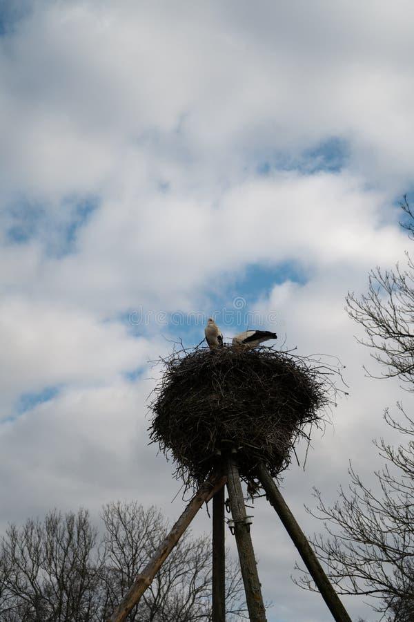 Wild ooievaarsnest op een pijler met een bewolkte hemelachtergrond - Twee ooievaars die familie maken royalty-vrije stock foto