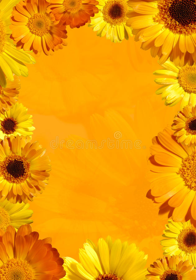 Download Wild Orange Flower Background Stock Photo - Image: 19998040