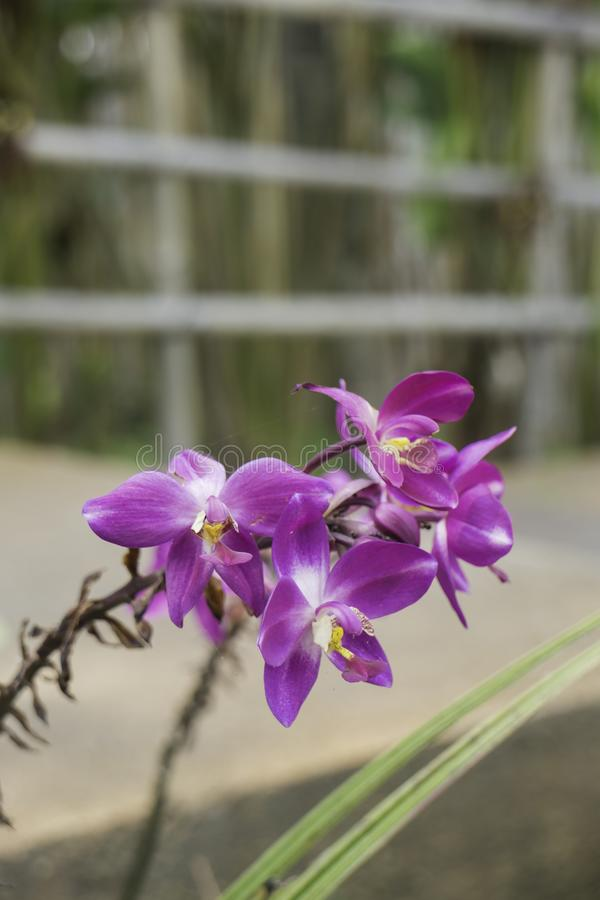 Wild orchid flower plant in nature. Stock photo stock image