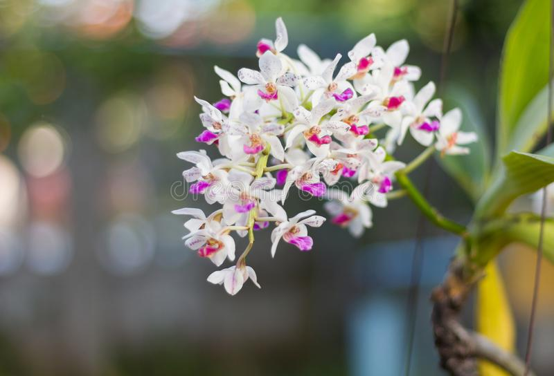 Wild orchids stock photos