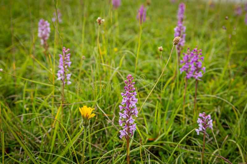 Wild Orchids stock photo