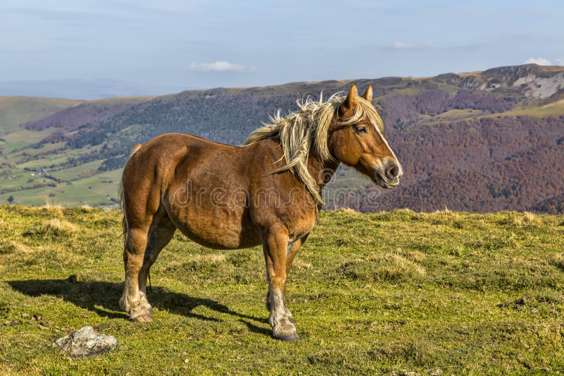 Wild paard stock afbeeldingen