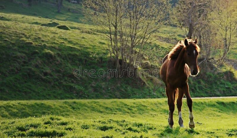 Wild paard stock fotografie