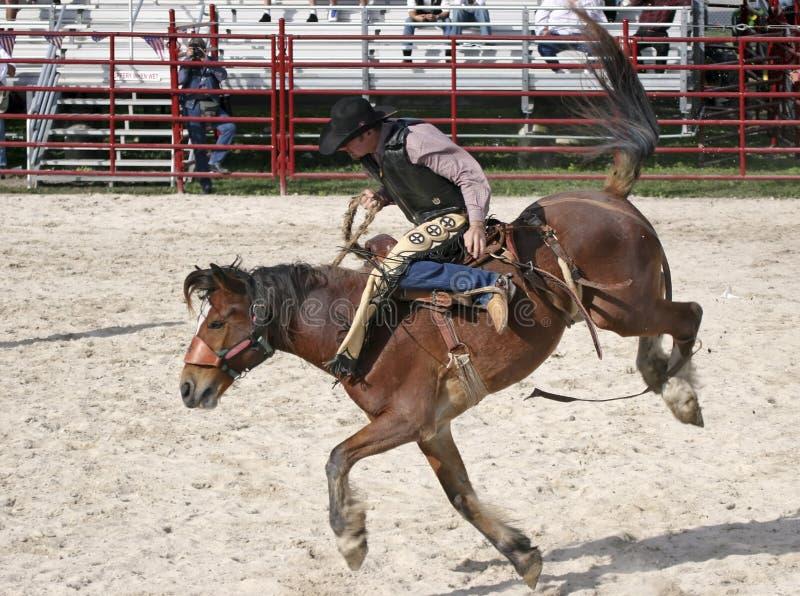 Wild paard dat 4 berijdt royalty-vrije stock fotografie