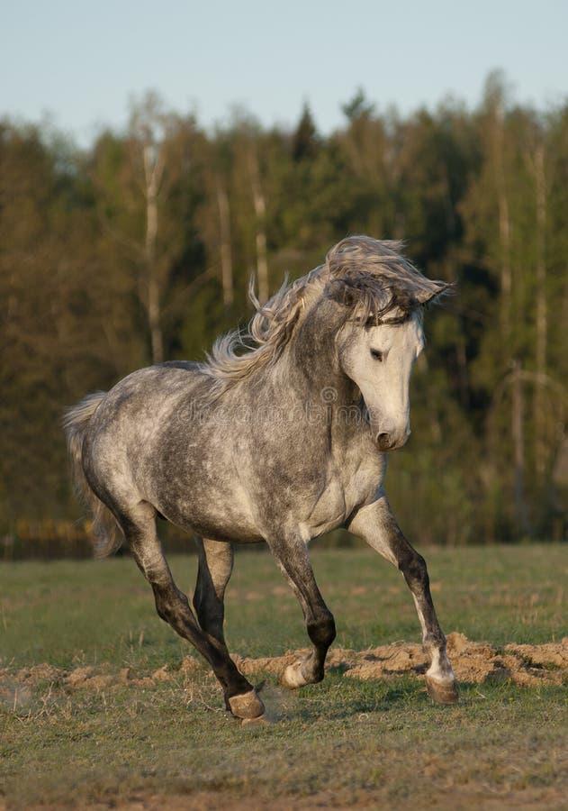 Wild paard in de zonsopgang royalty-vrije stock foto