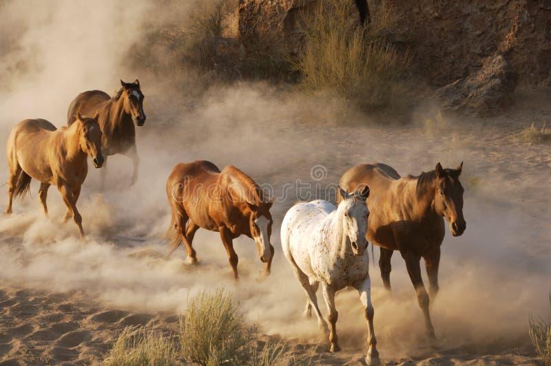 Wild paarden royalty-vrije stock foto