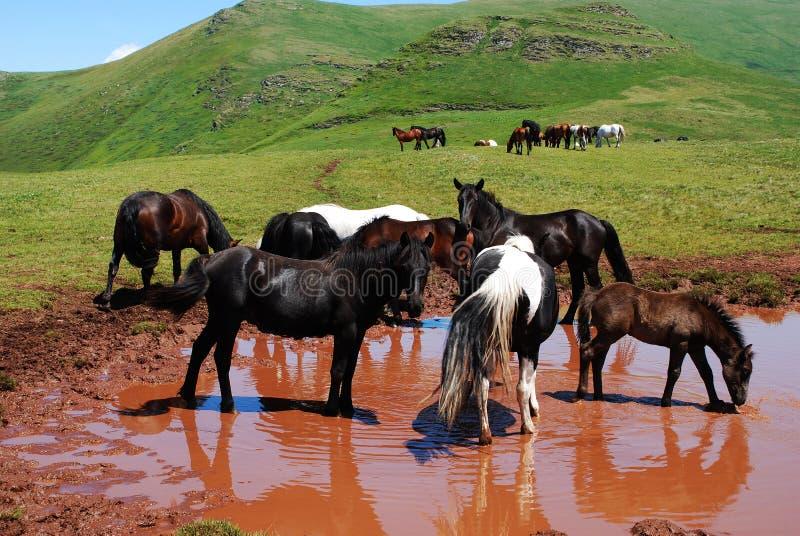 Wild paarden in aard stock foto
