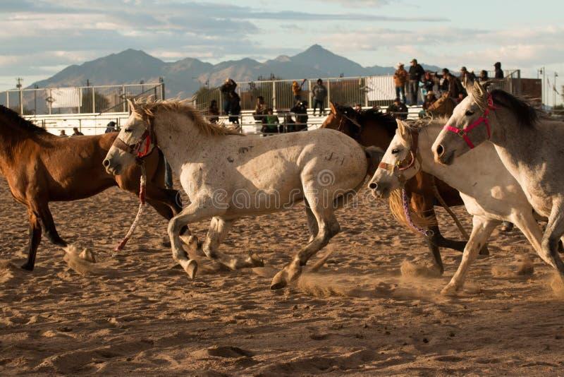 Wild paarden bij de Professionele Rodeo royalty-vrije stock fotografie
