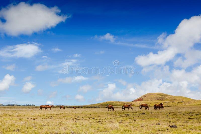 Wild paarden die tegen berglandschap weiden stock foto