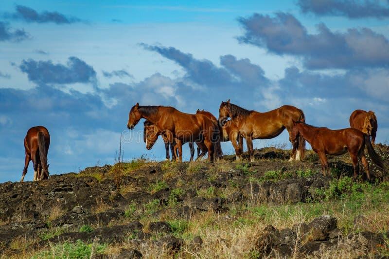 Wild paarden over de rotsen en de blauwe hemelachtergrond stock fotografie