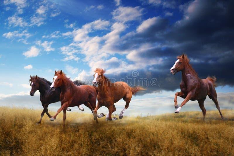 Wild paardengalop op geel gras stock afbeeldingen