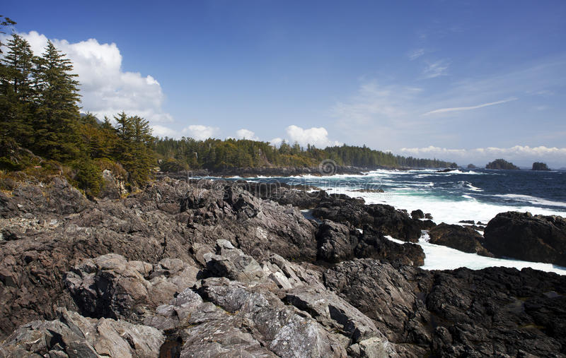 Download Wild Pacific Trail stock photo. Image of bush, trees - 24567446