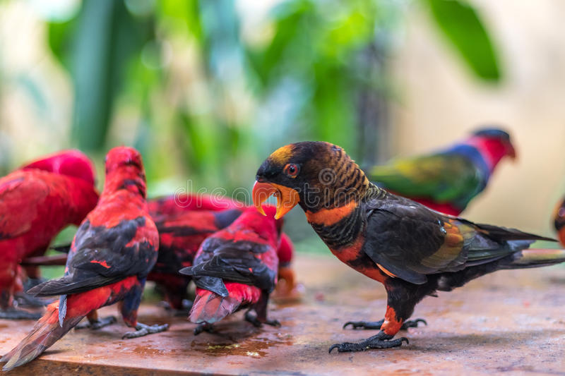 Wild Parrots Bird Colorful Parrot In Bali Zoo Indonesia Stock Image Image Of Cutebird Domestic 89198427
