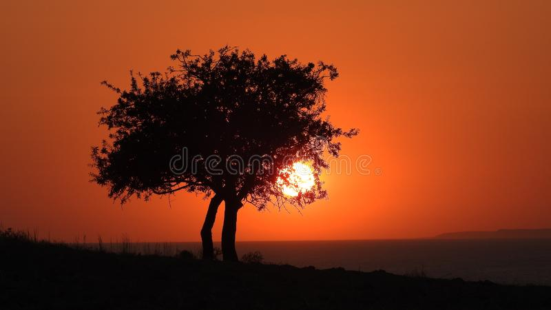 A wild pear tree and the sun, sunset with tree. Sun seen through the branches of the tree royalty free stock photos