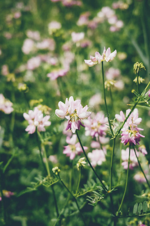 Wild pink flowers in green grass stock image image of spring download wild pink flowers in green grass stock image image of spring pretty mightylinksfo Image collections