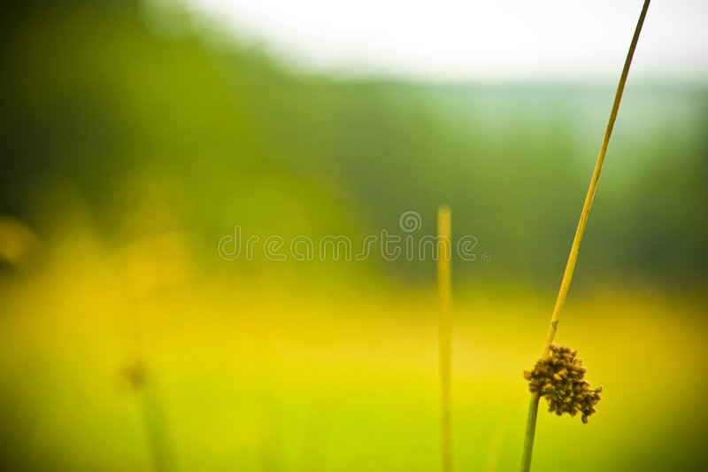 Download Wild plant stock image. Image of plant, wild, small, grass - 5906993