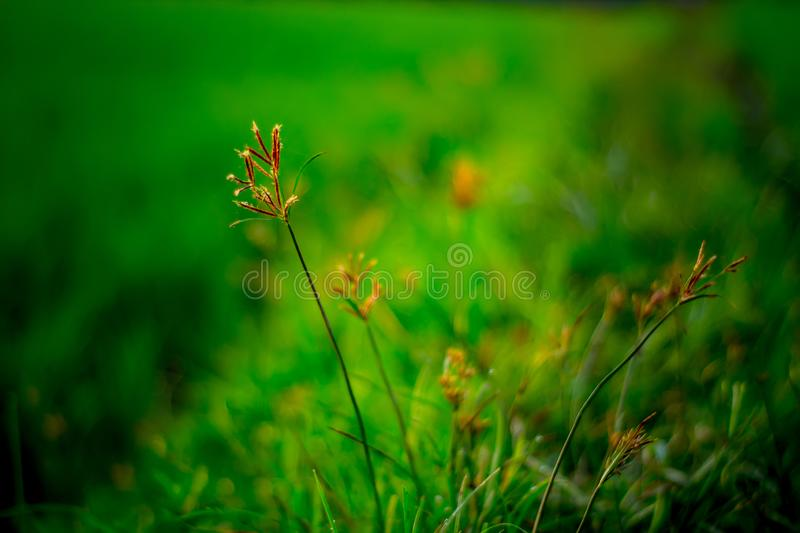 Wild Plant Grow on Footpath royalty free stock photography