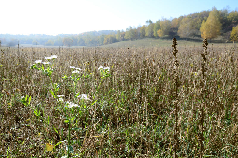 Wild plants flowers on the background of agricultural field in autumn stock photo
