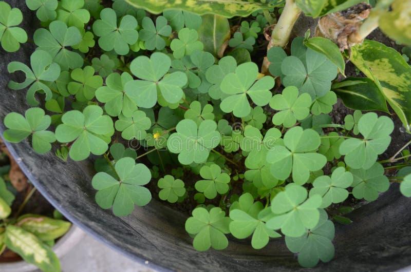 Wild plants in pots royalty free stock photos