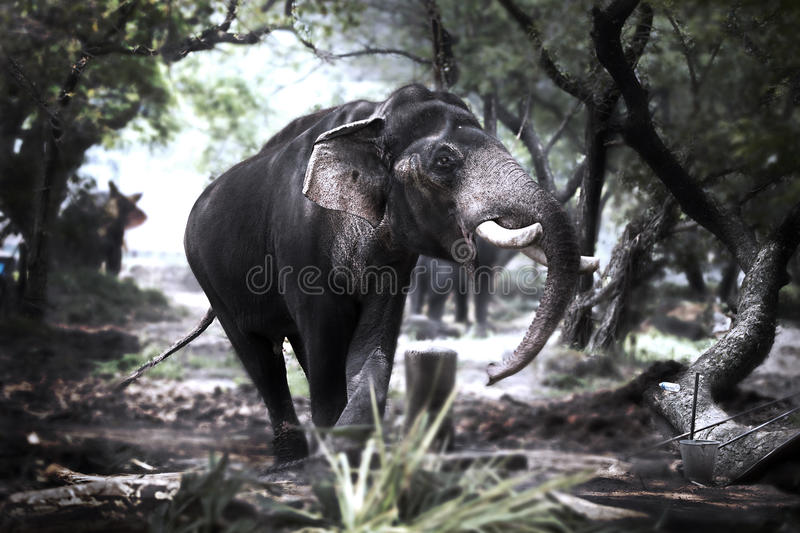 Download Wild Play stock photo. Image of tusker, elephants, indian - 29002454