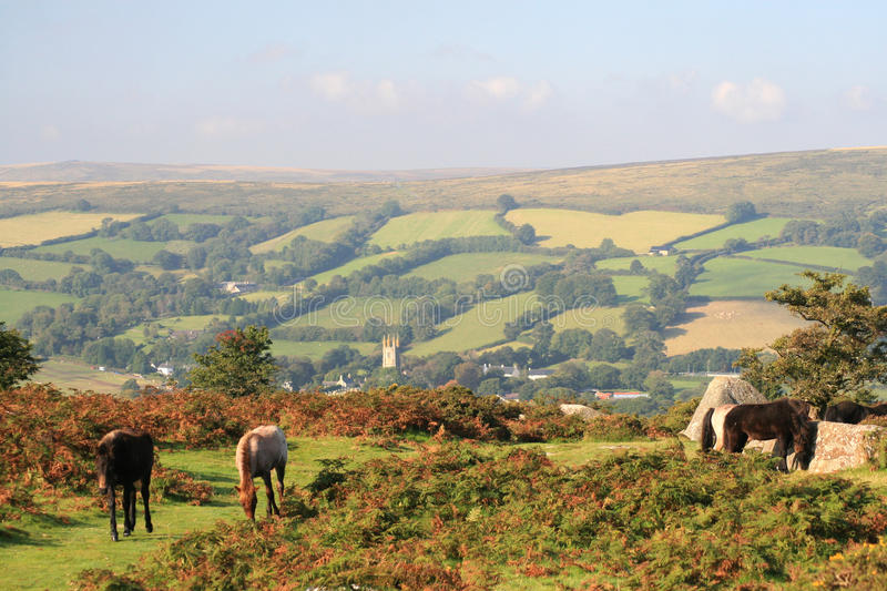 Wild ponies on Bonehill Down stock images