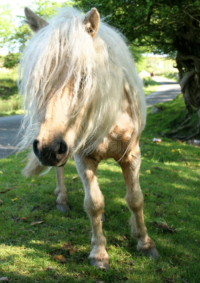 Download Wild Pony Having A Bad Hair Day Stock Image - Image: 188667