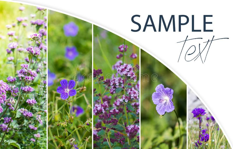 Wild purple flowers collage with place for your text. Wild purple flowers collage with place for text royalty free stock photography
