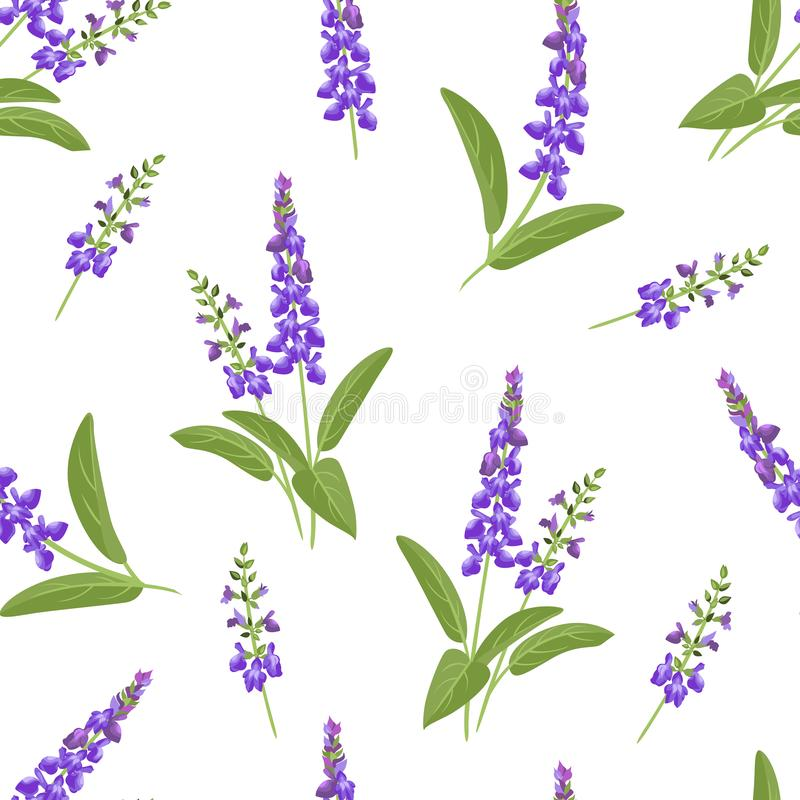 Wild purple flowers seamless pattern. Branches of flowering sage. On a white background. Vector illustration of medical herbs in cartoon flat style vector illustration