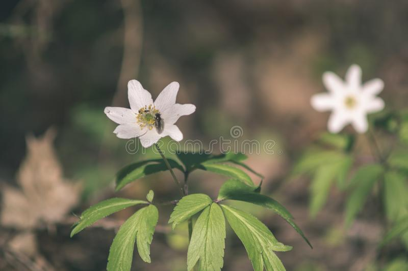 Wild random flowers blooming in nature - vintage retro film look. Wild random flowers blooming in nature with green foliage in meadow field - vintage retro film stock image