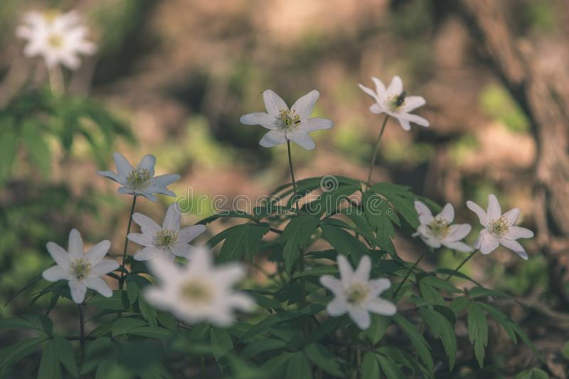 Wild random flowers blooming in nature - vintage retro film look. Wild random flowers blooming in nature with green foliage in meadow field - vintage retro film royalty free stock photos