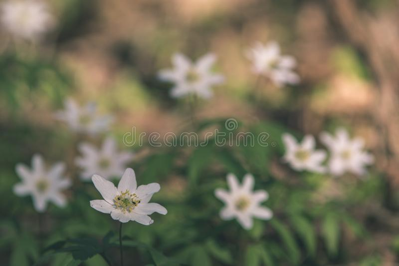 Wild random flowers blooming in nature - vintage retro film look. Wild random flowers blooming in nature with green foliage in meadow field - vintage retro film royalty free stock images